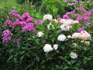 Ondernemen is per categorie anders. Een bloemisterij heeft een heel andere opzet nodig dan een praktijk in de zorg.