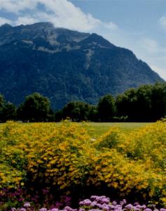 Zwitserland is een prachtig, maar jammer genoeg duur vakantieland. De Vierwaldstättersee is daarvan voor ons een fantastisch hoogtepunt geweest.