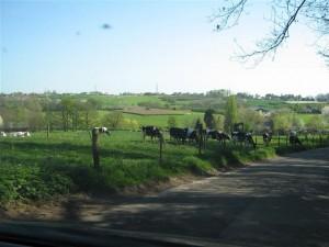 Direct onder en naast Stein beginnen in Zuid-Limburg al de heuvels.