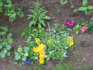 Besparen en zuinig zijn kunt u door eenmaal gekochte voorjaarsplanten steeds opnieuw in huis te halen. Zo hebt u van een eenmalige aankoop soms jarenlang plezier.