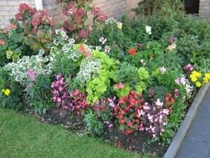 Zomerplanten mogen pas na 15 mei (na de feestdagen van de ijsheiligen) naar buiten.