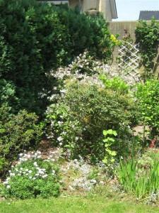 In een onderhoudsvrije tuin hoeft u meestal alleen te snoeien.