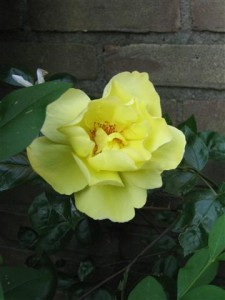 Een bloemetje voor een zieke kunnen we altijd nog uit de tuin plukken als de ziekenfondspremie nog veel duurder gaat worden.