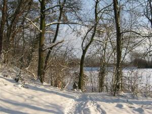 Het besneeuwde bos uit het Kerst verhaal.