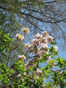 In maart beginnen de voorjaarswerkzaamheden in de tuin.